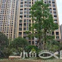 福晟钱隆公馆绿化